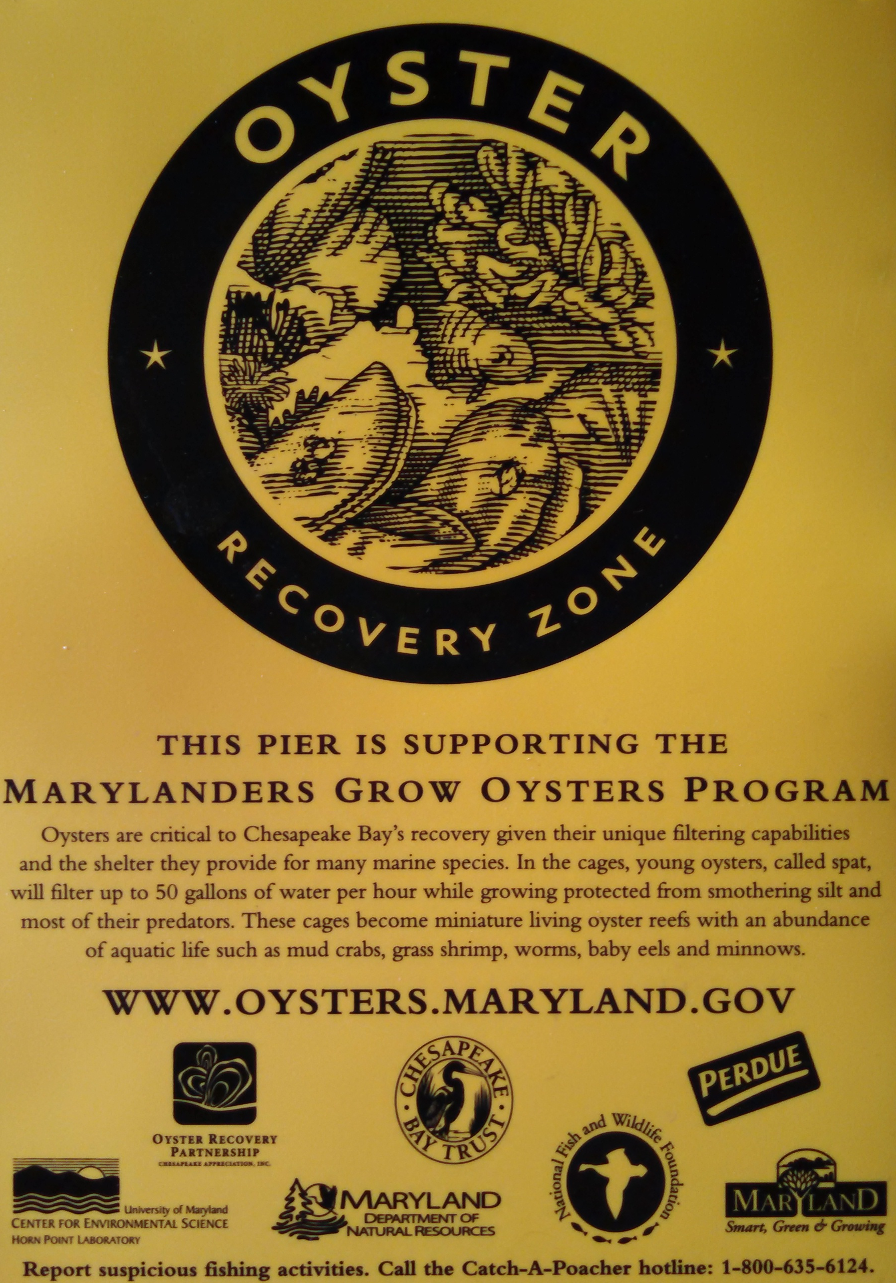 Oyster Growers